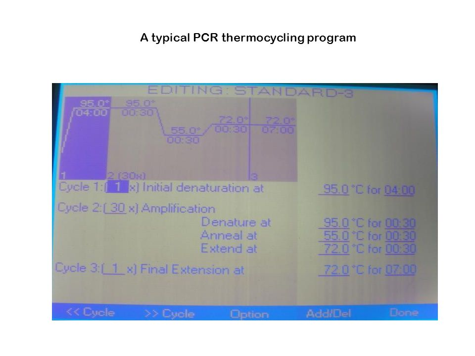 A typical PCR thermocycling program