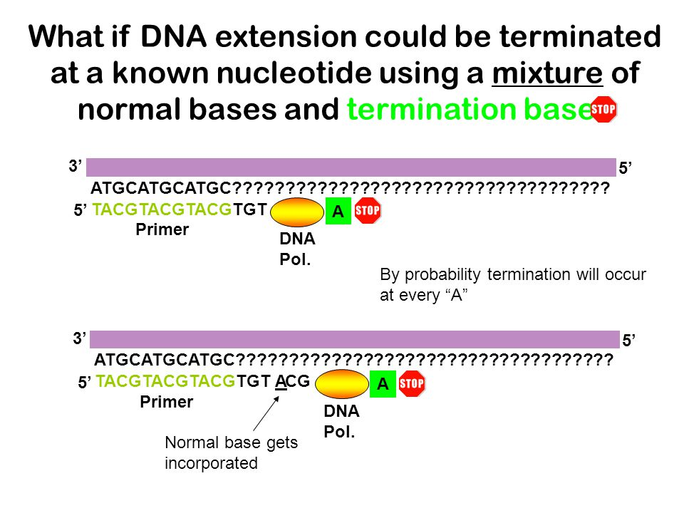 What if DNA extension could be terminated at a known nucleotide using a mixture of normal bases and termination bases TACGTACGTACGTGT ATGCATGCATGC????