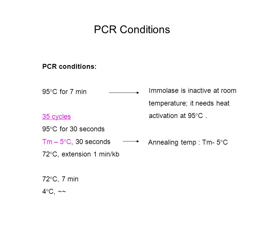 PCR Conditions PCR conditions: 95  C for 7 min 35 cycles 95  C for 30 seconds Tm – 5  C, 30 seconds 72  C, extension 1 min/kb 72  C, 7 min 4  C, ~~ Immolase is inactive at room temperature; it needs heat activation at 95  C.