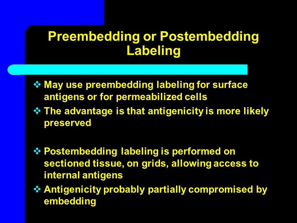 Preembedding or Postembedding Labeling  May use preembedding labeling for surface antigens or for permeabilized cells  The advantage is that antigen
