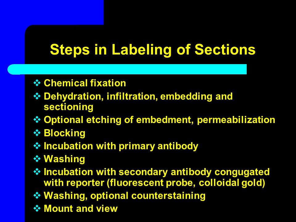 Steps in Labeling of Sections  Chemical fixation  Dehydration, infiltration, embedding and sectioning  Optional etching of embedment, permeabilizat