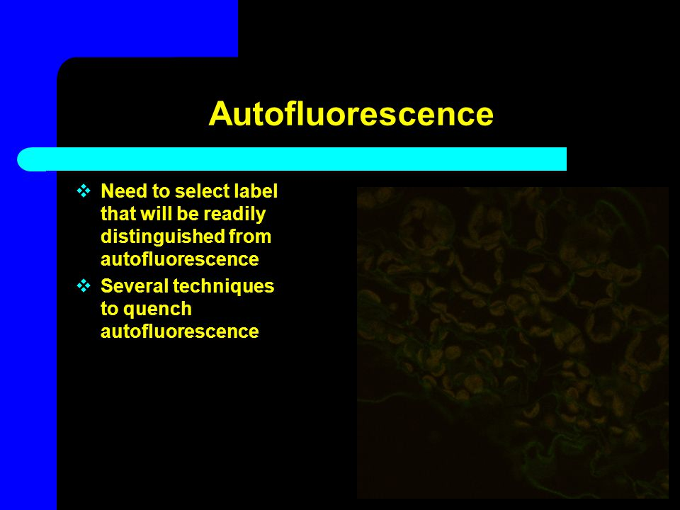 Autofluorescence  Need to select label that will be readily distinguished from autofluorescence  Several techniques to quench autofluorescence