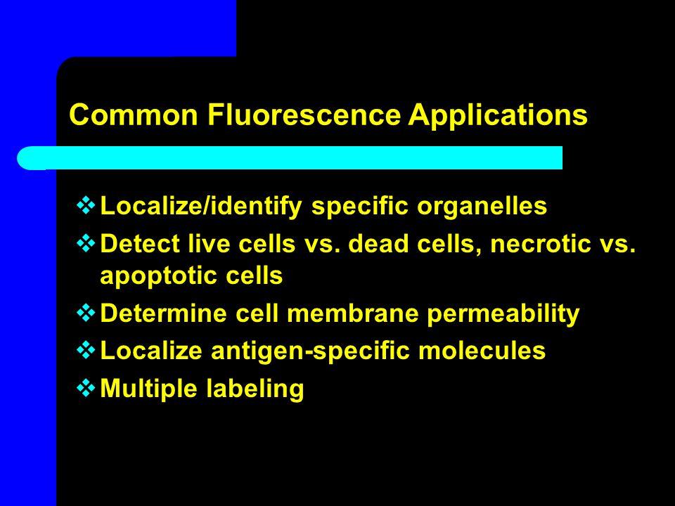 Common Fluorescence Applications  Localize/identify specific organelles  Detect live cells vs. dead cells, necrotic vs. apoptotic cells  Determine