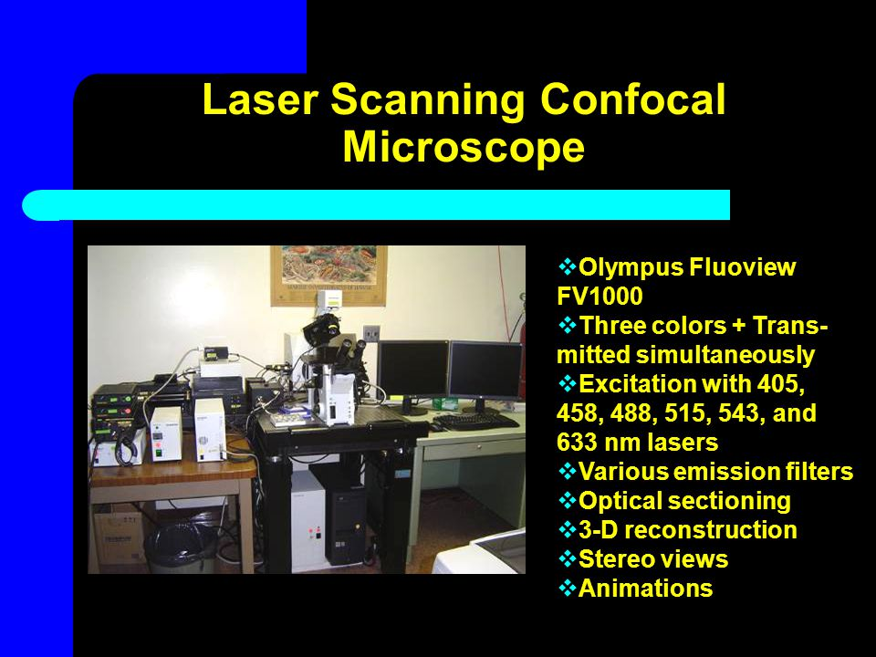 Laser Scanning Confocal Microscopy  Adjustable pinhole aperture eliminates out-of-focus glare  Better resolution  Serial optical sections can be collected from thick specimens  Live or fixed cell and tissue imaging Photo courtesy of Gregg Meada & Dr.