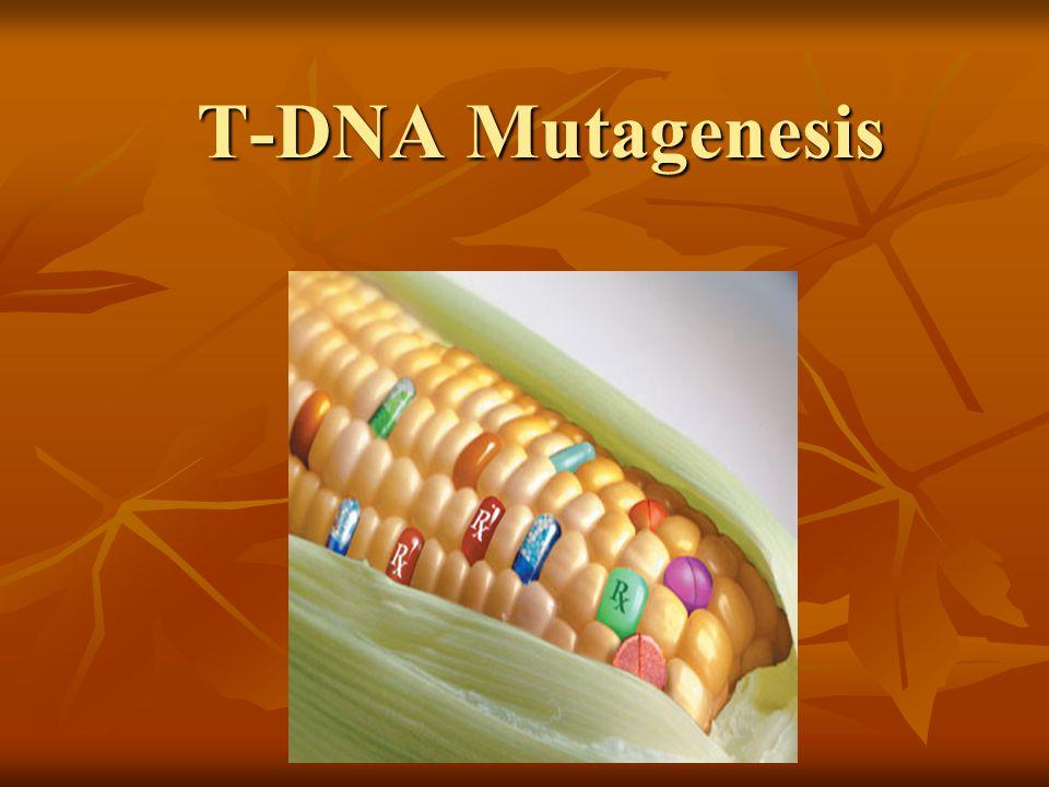 T-DNA Mutagenesis T-DNA Mutagenesis