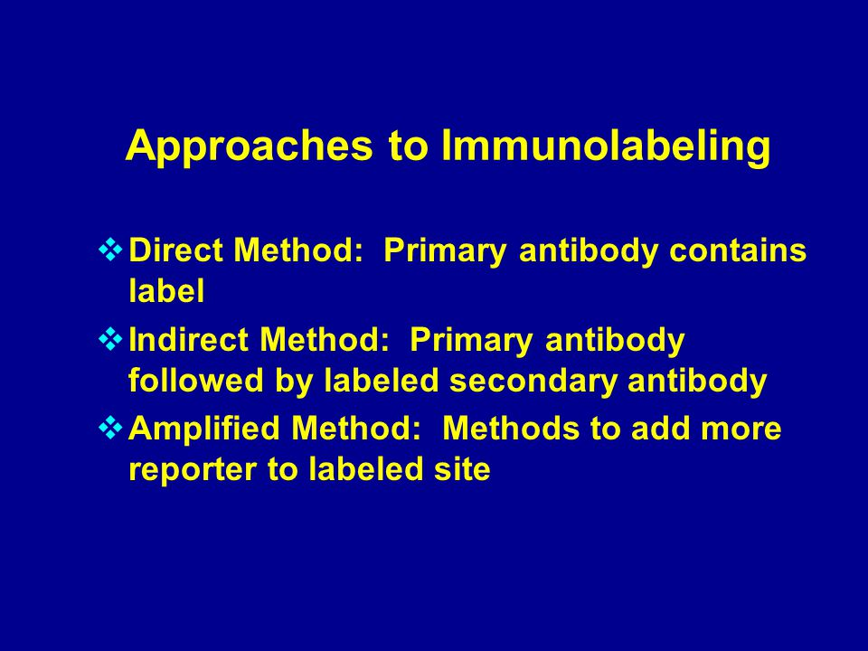 Approaches to Immunolabeling  Direct Method: Primary antibody contains label  Indirect Method: Primary antibody followed by labeled secondary antibody  Amplified Method: Methods to add more reporter to labeled site