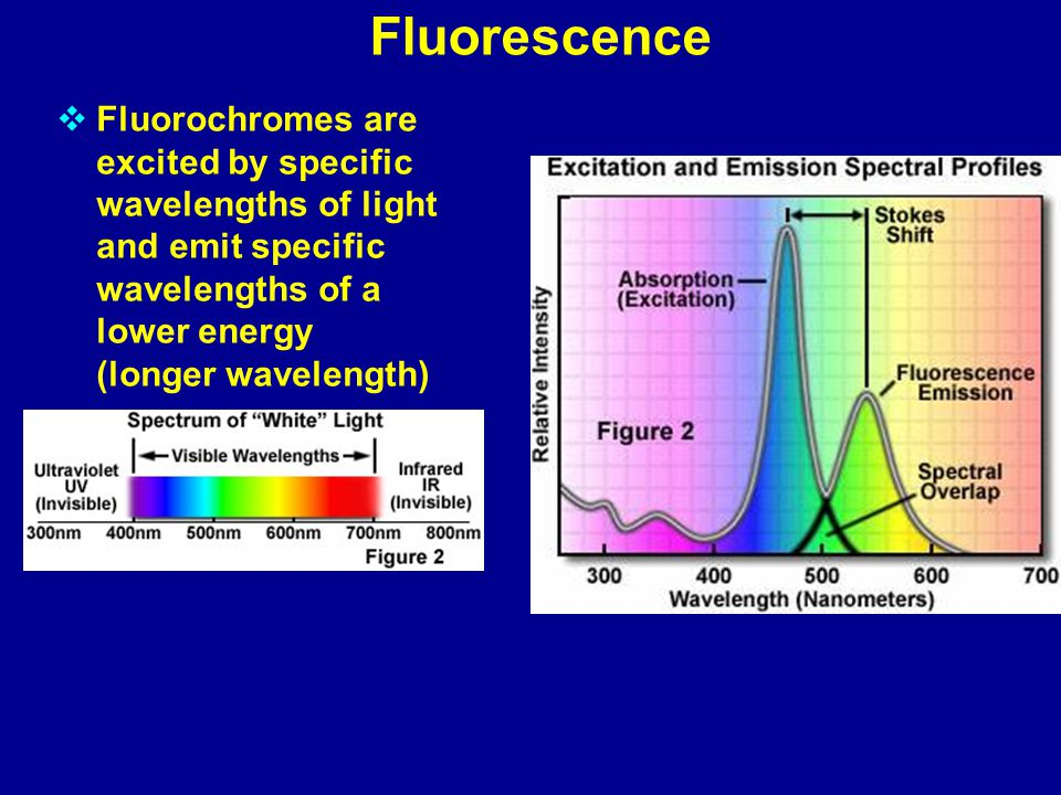 Fluorescence  Fluorochromes are excited by specific wavelengths of light and emit specific wavelengths of a lower energy (longer wavelength)