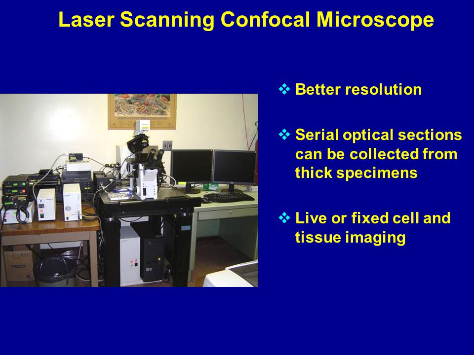 Laser Scanning Confocal Microscope  Better resolution  Serial optical sections can be collected from thick specimens  Live or fixed cell and tissue imaging