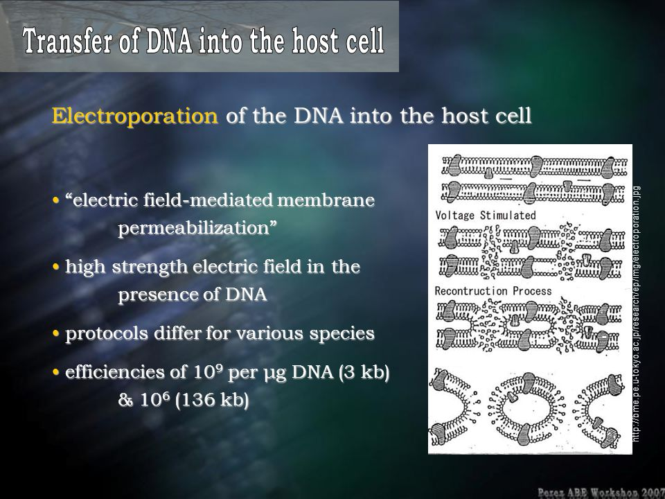 "Electroporation of the DNA into the host cell ""electric field-mediated membrane permeabilization"" ""electric field-mediated membrane permeabilization"""