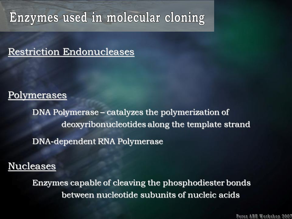 Nucleases Polymerases DNA Polymerase – catalyzes the polymerization of deoxyribonucleotides along the template strand DNA-dependent RNA Polymerase Res