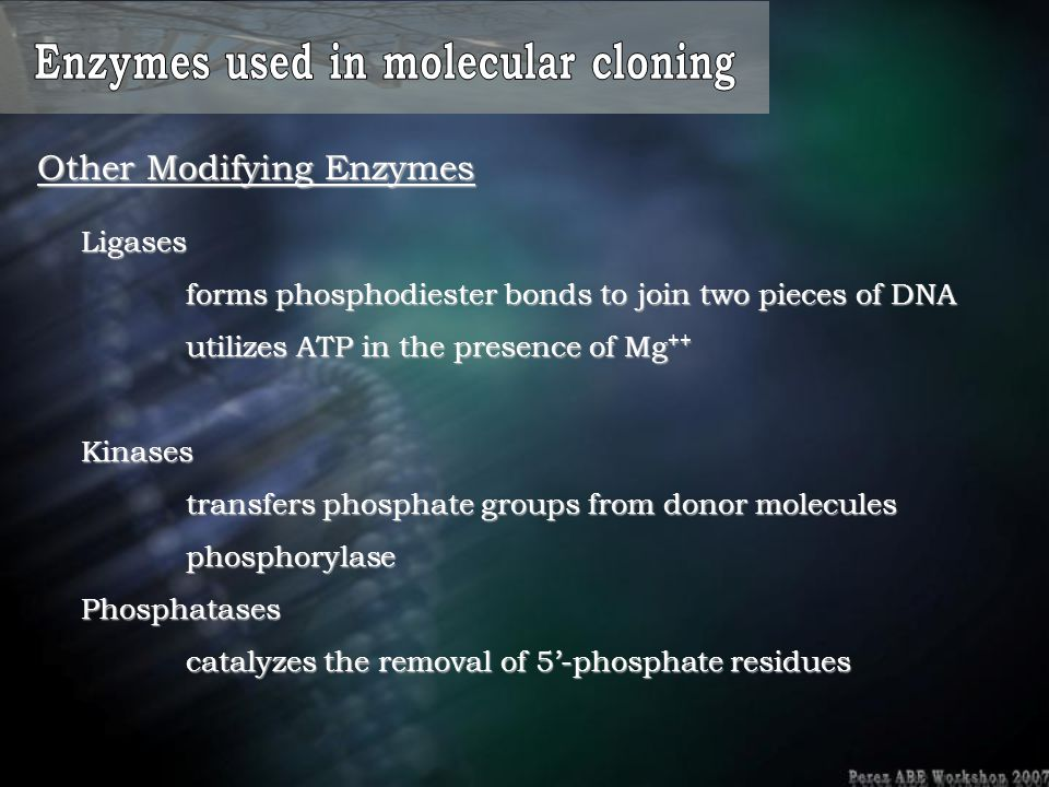 Other Modifying Enzymes Ligases forms phosphodiester bonds to join two pieces of DNA utilizes ATP in the presence of Mg ++ Kinases transfers phosphate