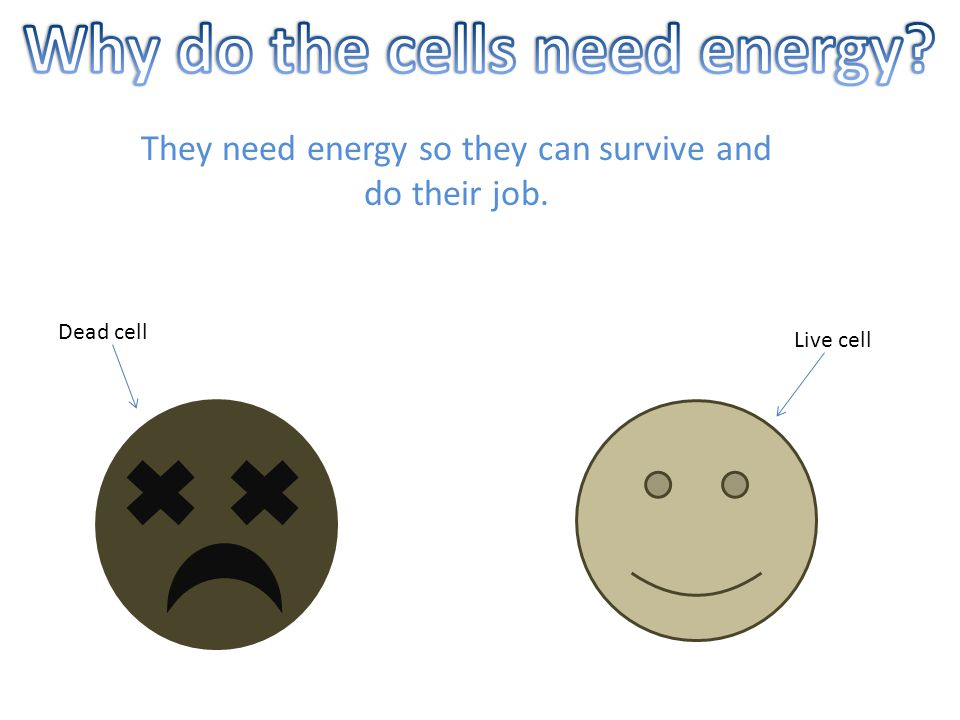 They need energy so they can survive and do their job. Dead cell Live cell
