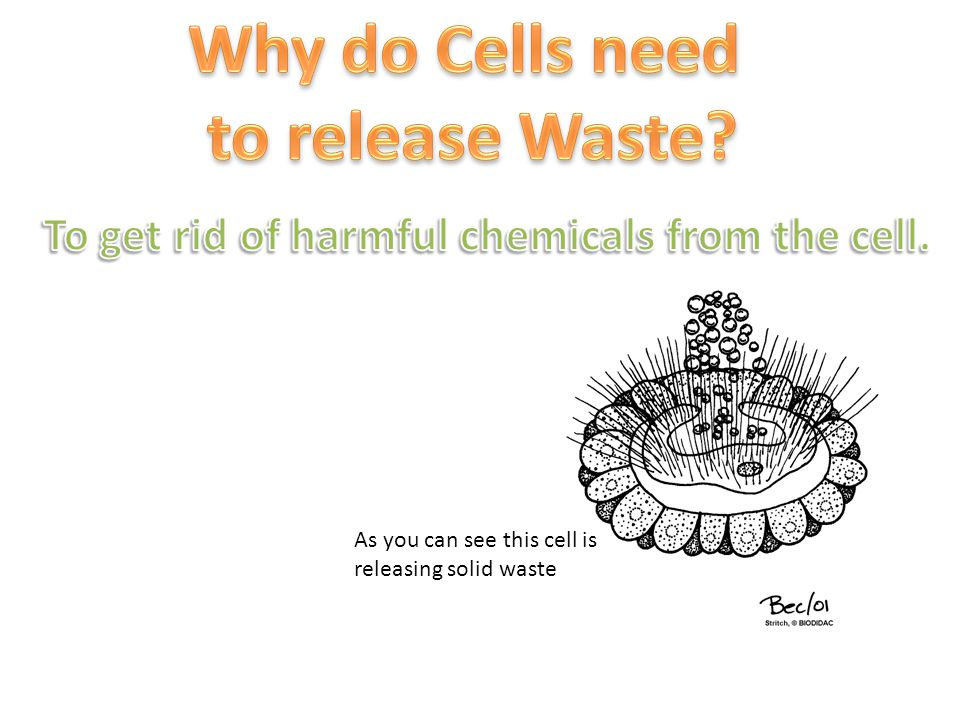 As you can see this cell is releasing solid waste