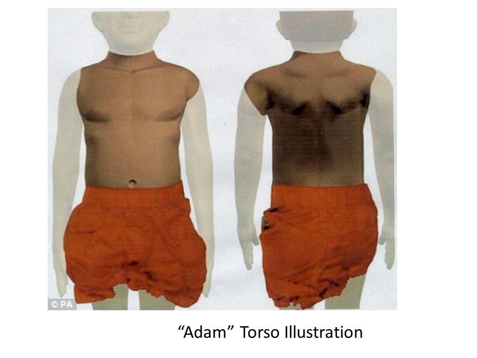 Adam Torso Illustration