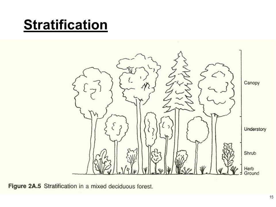 15 Stratification