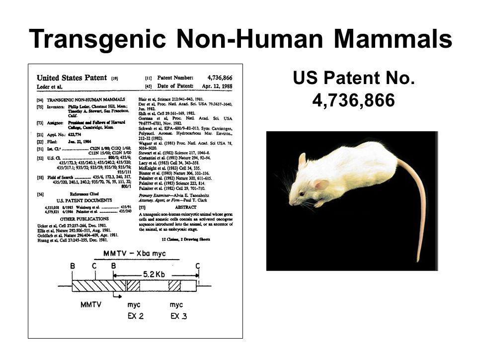 Transgenic Non-Human Mammals US Patent No. 4,736,866