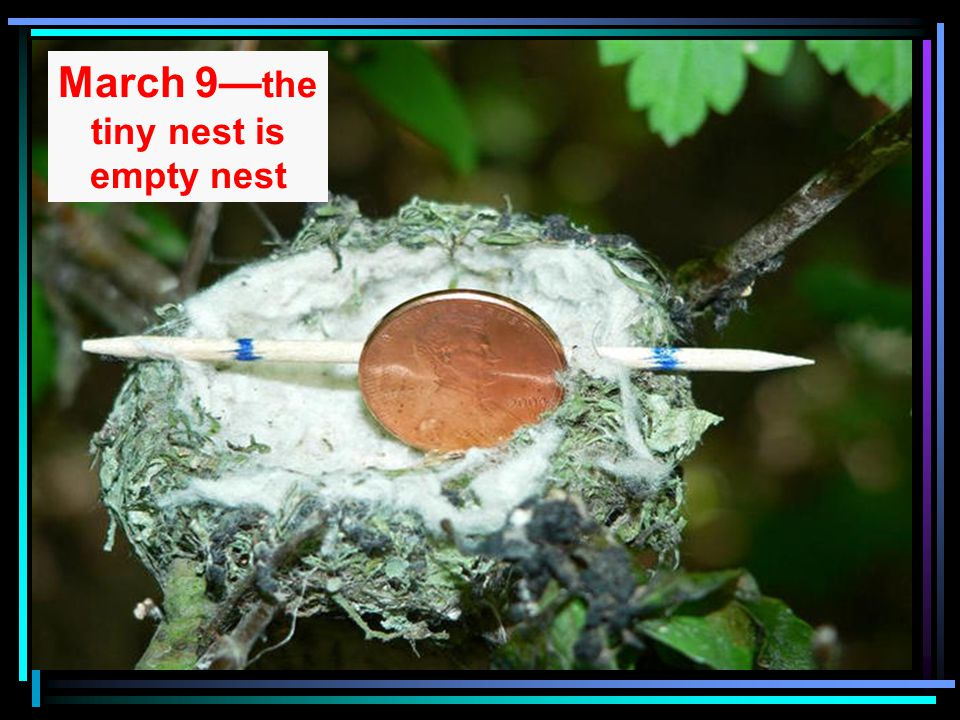 March 9— the tiny nest is empty nest