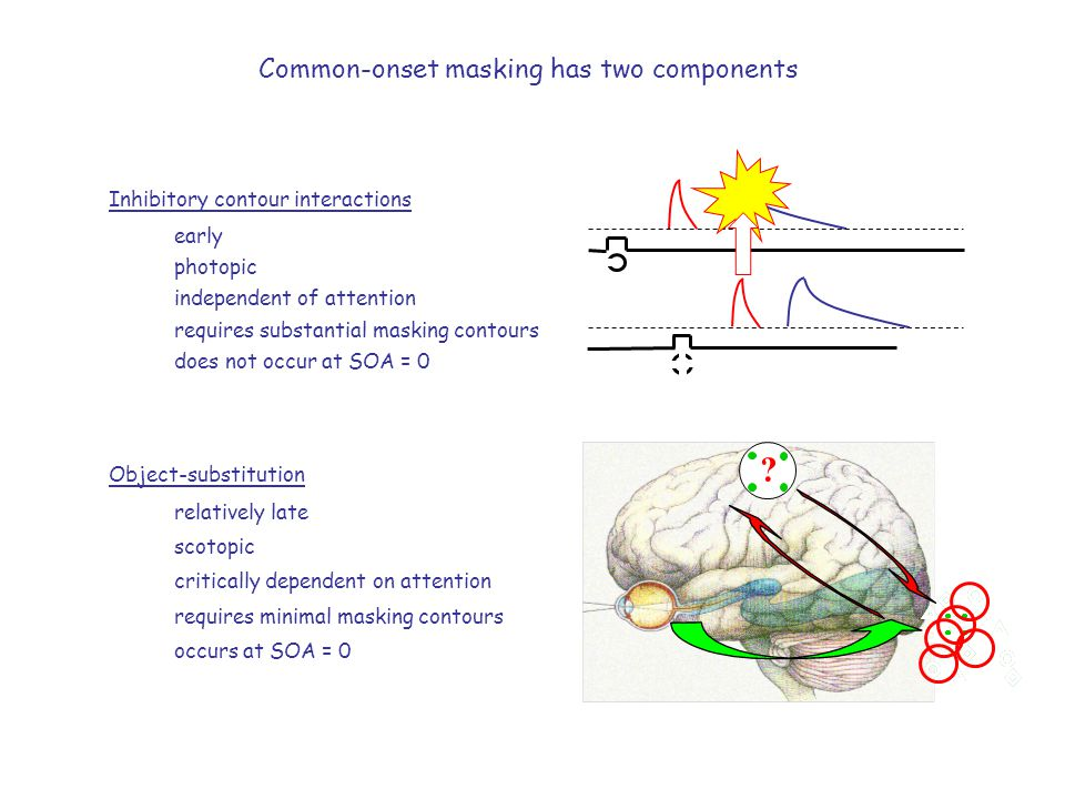 Common-onset masking has two components Inhibitory contour interactions early photopic independent of attention requires substantial masking contours does not occur at SOA = 0 Object-substitution relatively late scotopic critically dependent on attention requires minimal masking contours occurs at SOA = 0