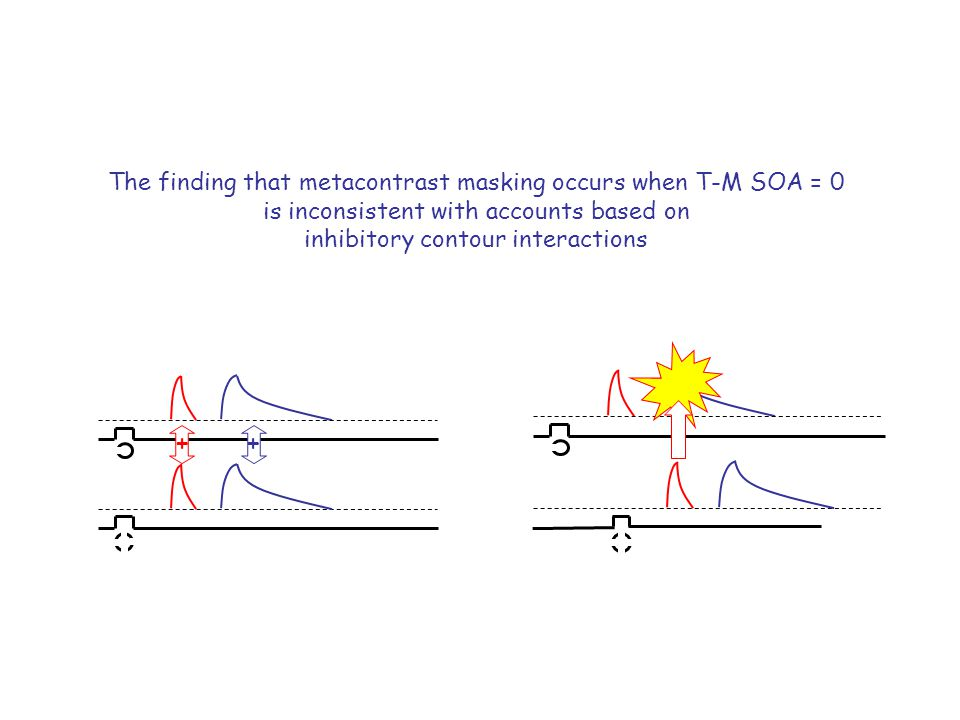 The finding that metacontrast masking occurs when T-M SOA = 0 is inconsistent with accounts based on inhibitory contour interactions ++