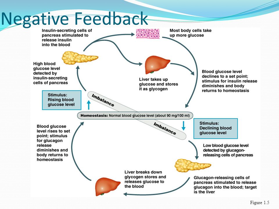 Negative Feedback Figure 1.5