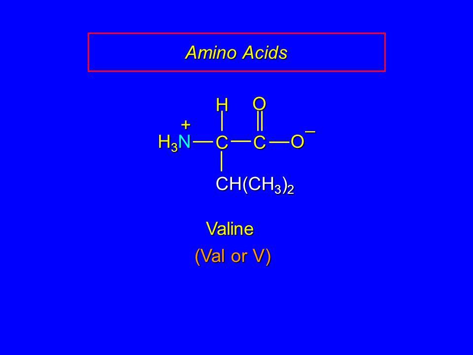 Amino Acids CC O O – CH(CH 3 ) 2 H H3NH3NH3NH3N + Valine (Val or V)