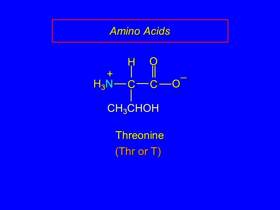 Amino Acids CC O O – CH 3 CHOH H H3NH3NH3NH3N + Threonine (Thr or T)