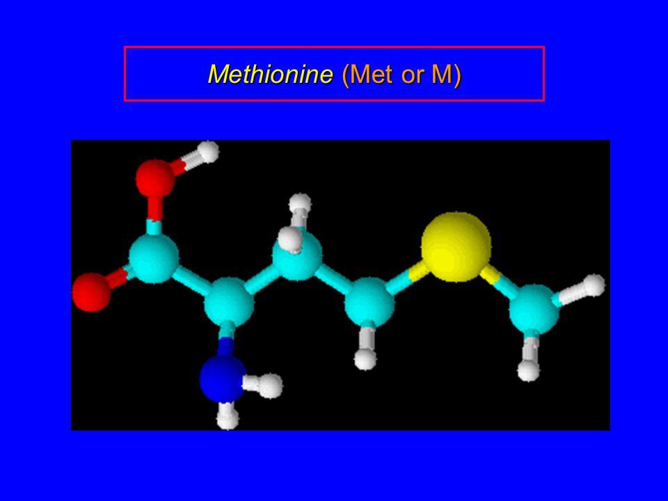 Methionine (Met or M)