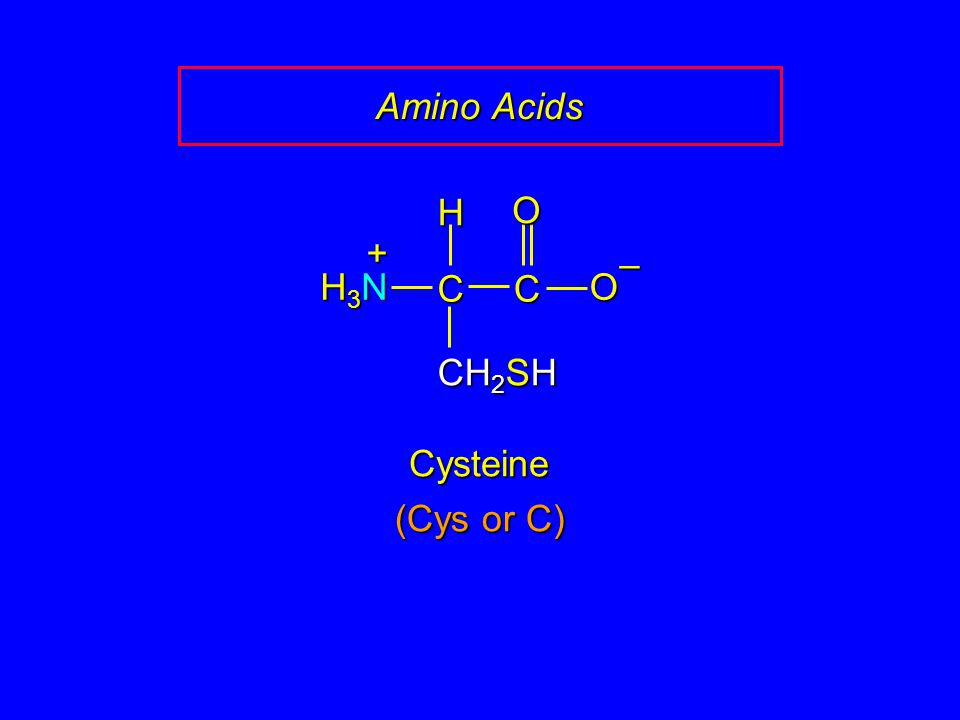 Amino Acids CC O O – CH 2 SH H H3NH3NH3NH3N + Cysteine (Cys or C)