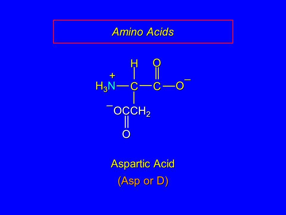 Amino Acids Aspartic Acid CCOO – H H3NH3NH3NH3N + OCCH 2 O – (Asp or D)