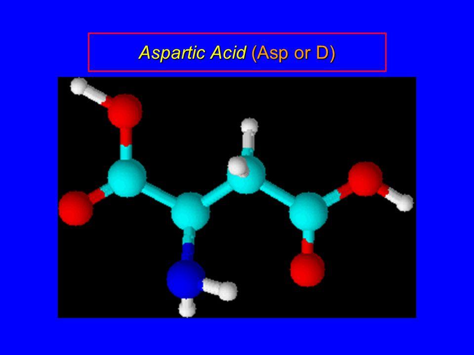 Aspartic Acid (Asp or D)