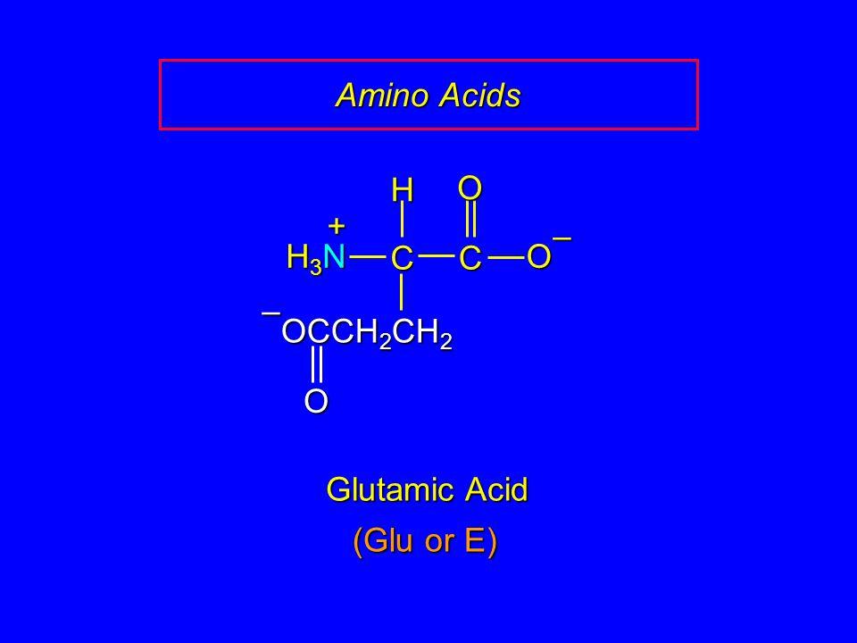 Amino Acids Glutamic Acid CCOO – H H3NH3NH3NH3N + OCCH 2 CH 2 O – (Glu or E)