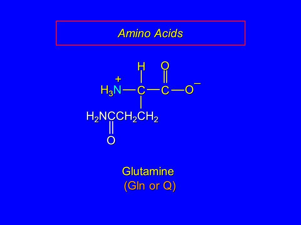 Amino Acids Glutamine CCOO – H H3NH3NH3NH3N + H 2 NCCH 2 CH 2 O (Gln or Q)