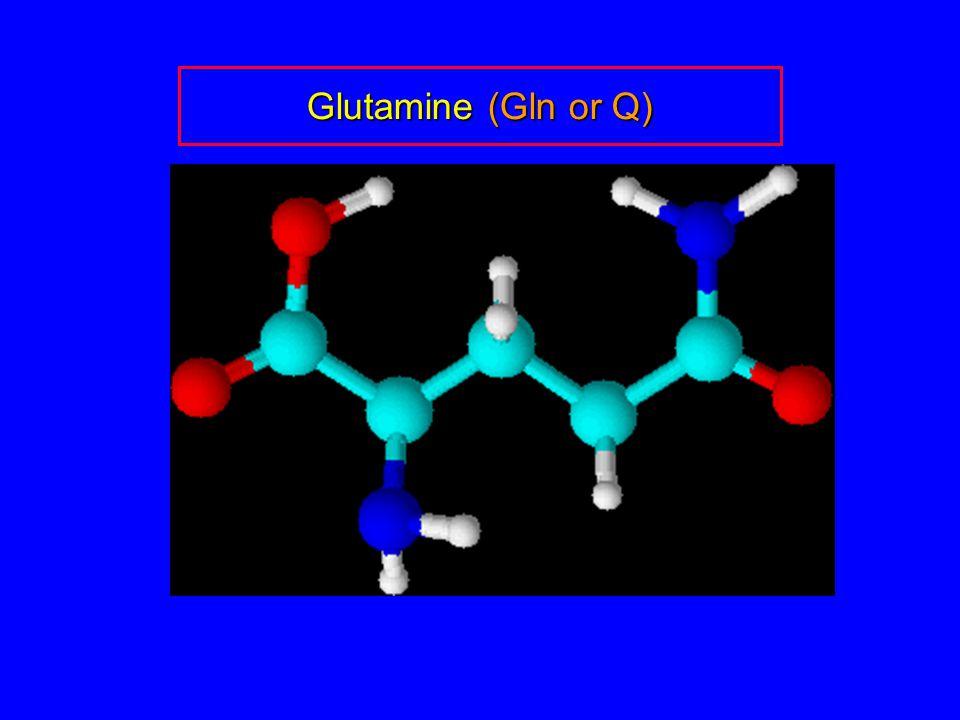 Glutamine (Gln or Q)