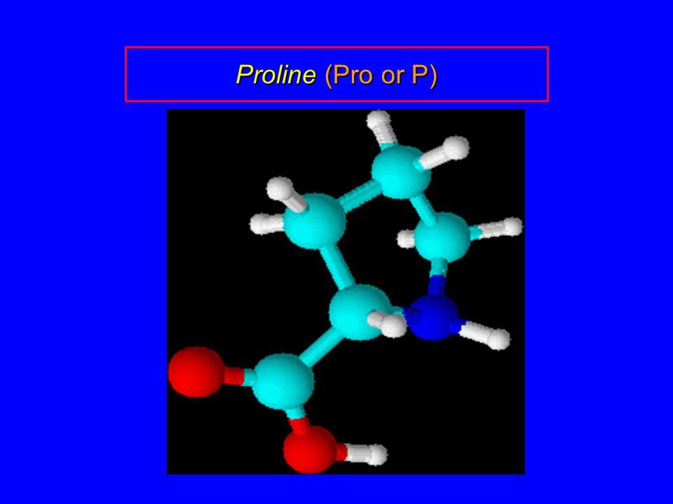 Proline (Pro or P)