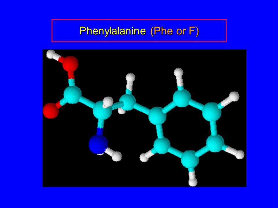 Phenylalanine (Phe or F)