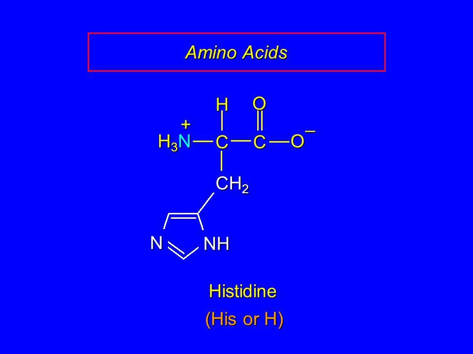 Amino Acids Histidine CC O O – H H3NH3NH3NH3N + CH 2 NH N (His or H)