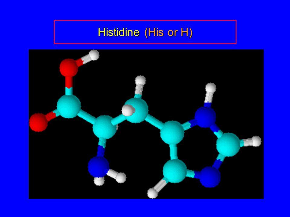 Histidine (His or H)