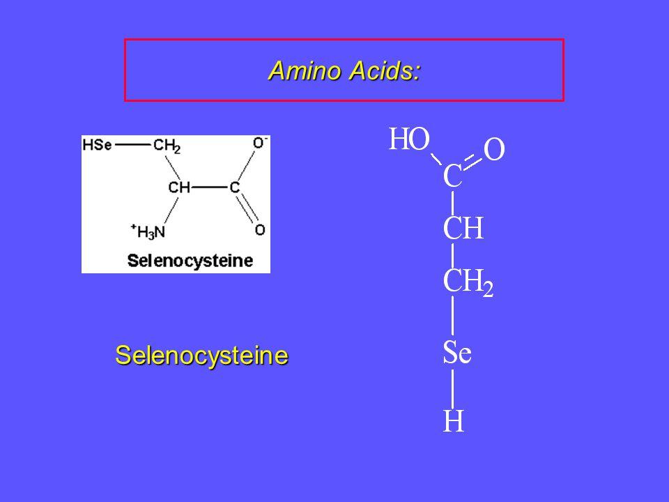 Amino Acids: Selenocysteine