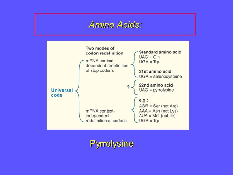 Amino Acids: Pyrrolysine