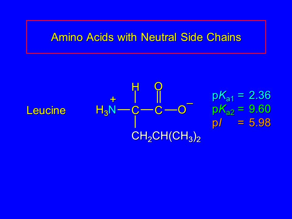 Amino Acids with Neutral Side Chains Leucine pK a1 = 2.36 pK a2 =9.60 pI =5.98 H3NH3NH3NH3N CCOO – CH 2 CH(CH 3 ) 2 H +