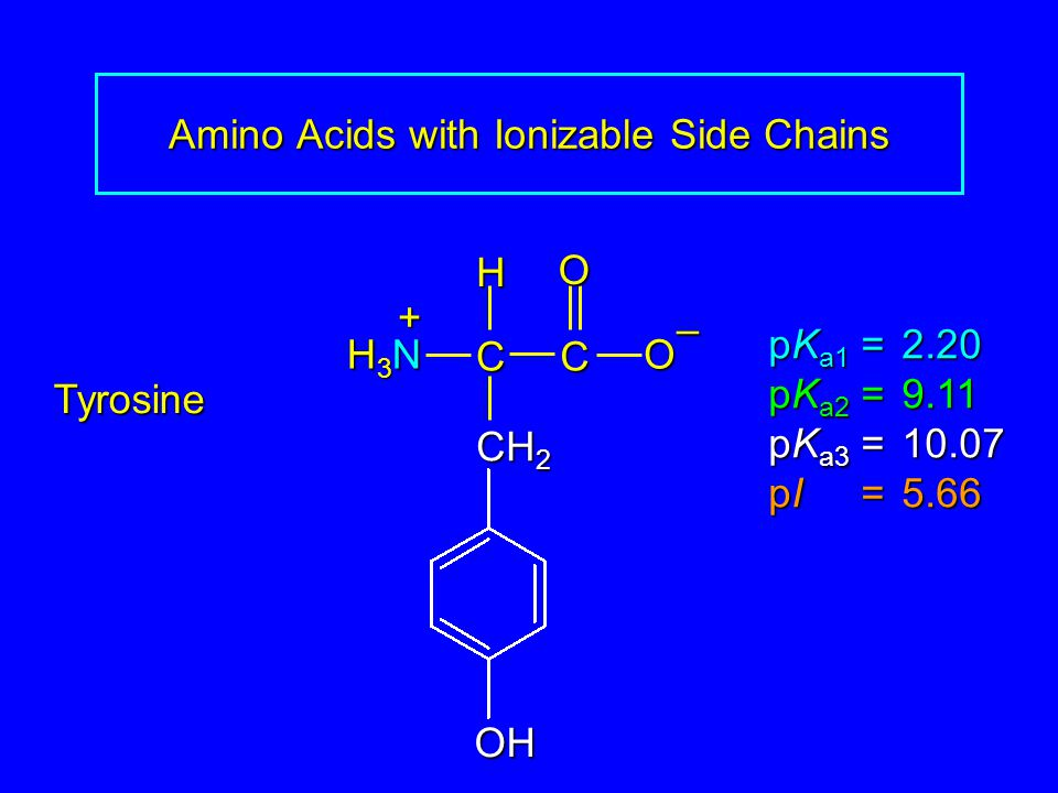 Amino Acids with Ionizable Side Chains Tyrosine pK a1 = 2.20 pK a2 =9.11 pK a3 =10.07 pI =5.66 H3NH3NH3NH3N CCOO – H + CH 2 OH