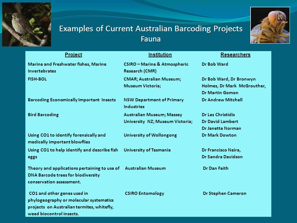 Examples of Current Australian Barcoding Projects Fauna ProjectInstitutionResearchers Marine and Freshwater fishes, Marine Invertebrates CSIRO – Marine & Atmospheric Research (CMR) Dr Bob Ward FISH-BOL CMAR; Australian Museum; Museum Victoria; Dr Bob Ward, Dr Bronwyn Holmes, Dr Mark McGrouther, Dr Martin Gomon Barcoding Economically Important InsectsNSW Department of Primary Industries Dr Andrew Mitchell Bird Barcoding Australian Museum; Massey University NZ; Museum Victoria; Dr Les Christidis Dr David Lambert Dr Janette Norman Using CO1 to identify forensically and medically important blowflies University of WollongongDr Mark Dowton Using CO1 to help identify and describe fish eggs University of Tasmania Dr Francisco Neira, Dr Sandra Davidson Theory and applications pertaining to use of DNA Barcode trees for biodiversity conservation assessment.