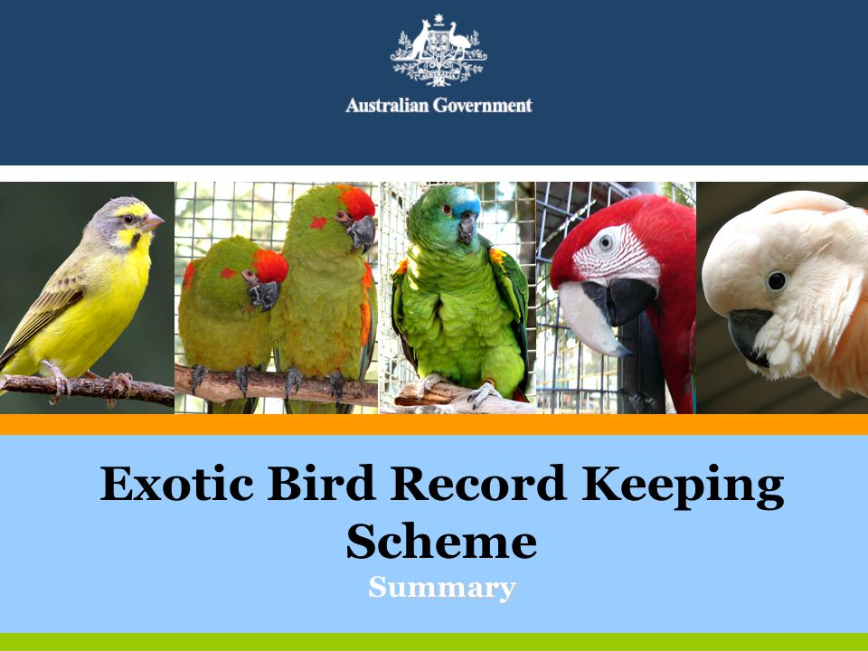 mmary Exotic Bird Record Keeping Scheme Summary