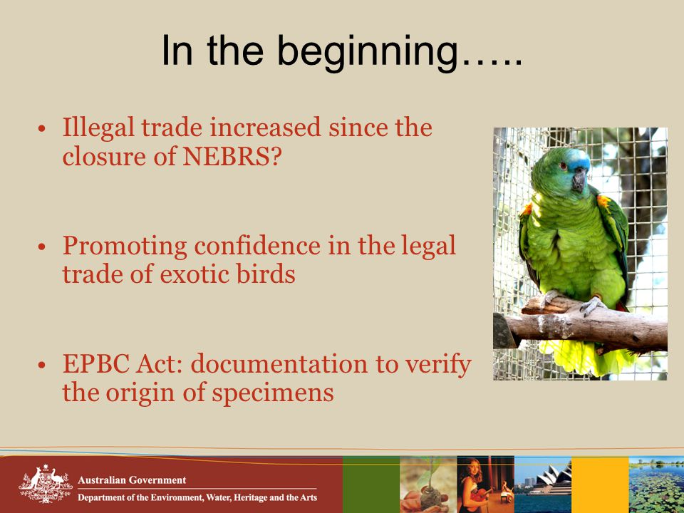 In the beginning….. Illegal trade increased since the closure of NEBRS.