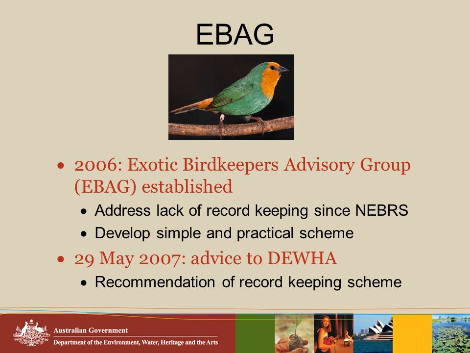 EBAG  2006: Exotic Birdkeepers Advisory Group (EBAG) established  Address lack of record keeping since NEBRS  Develop simple and practical scheme  29 May 2007: advice to DEWHA  Recommendation of record keeping scheme