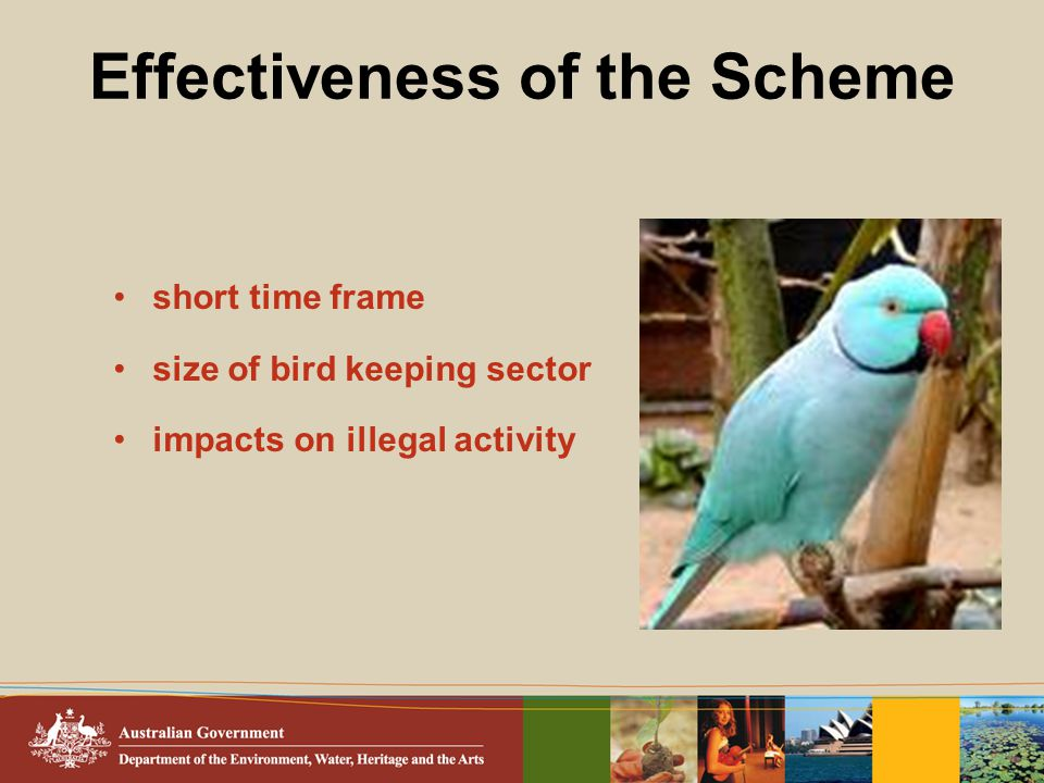 Effectiveness of the Scheme short time frame size of bird keeping sector impacts on illegal activity