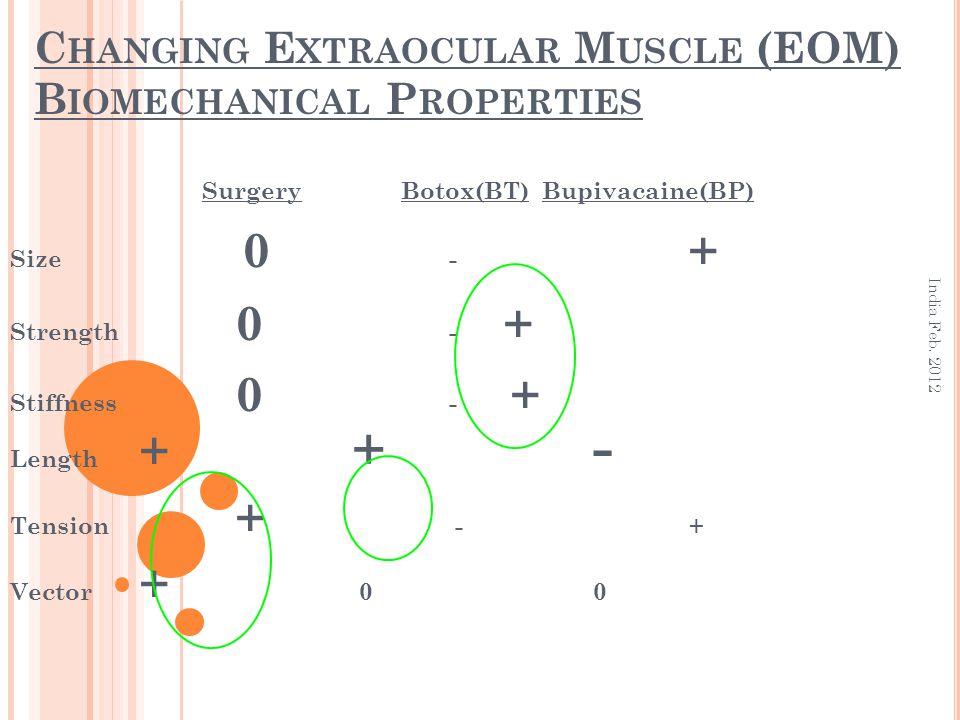 C HANGING E XTRAOCULAR M USCLE (EOM) B IOMECHANICAL P ROPERTIES Surgery Botox(BT) Bupivacaine(BP) Size 0 - + Strength 0 - + Stiffness 0 - + Length + +