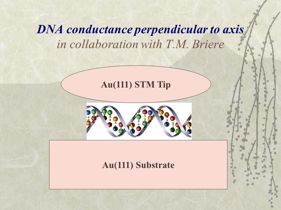 DNA conductance perpendicular to axis in collaboration with T.M.