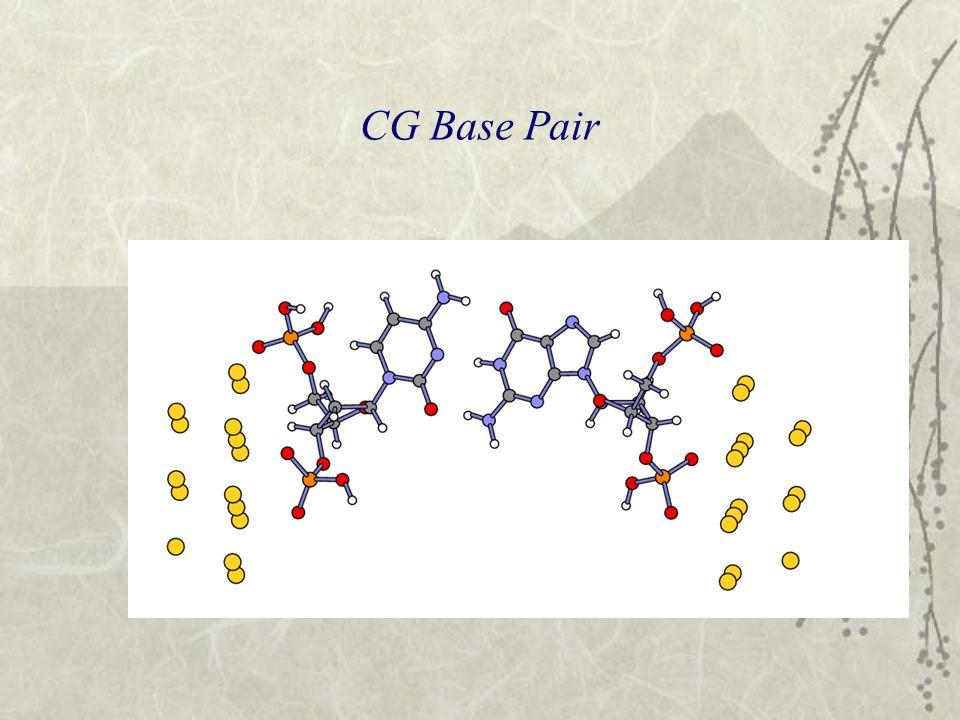 CG Base Pair
