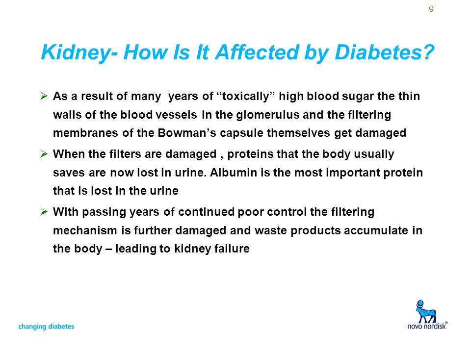 """9 Kidney- How Is It Affected by Diabetes?  As a result of many years of """"toxically"""" high blood sugar the thin walls of the blood vessels in the glome"""